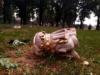 V Šaštíne spadol strom na sochu Sedembolestnej Panny Márie
